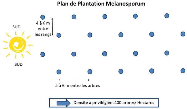 Plan de plantation melanosporum