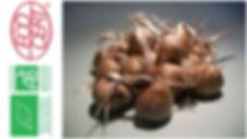 bulbes de safran bio