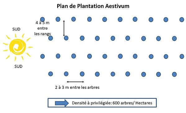 Plan de plantation aestivum
