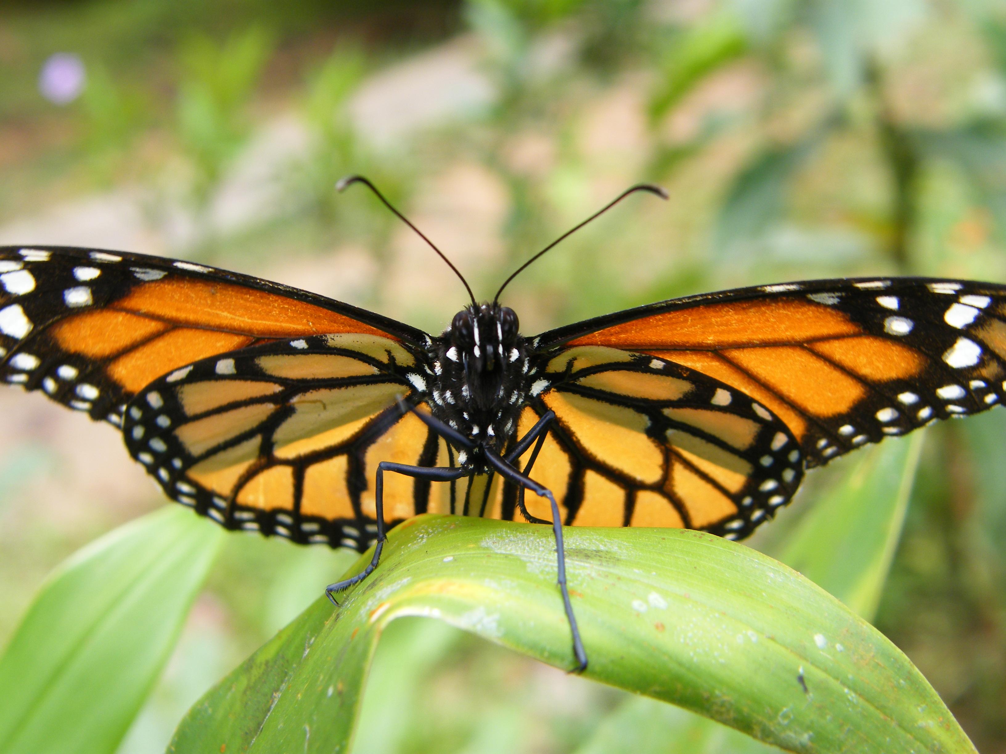 Copy of Butterfly