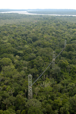 Canopy Walkway 6_preview