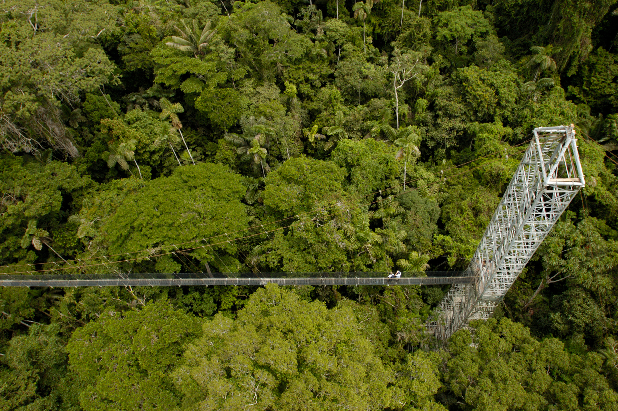 Canopy Walkway 4 (1)_preview