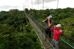 Canopy Walkway 7_preview
