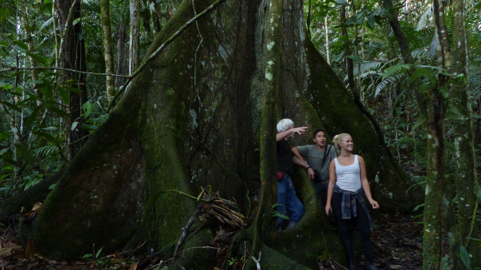 Copy of bosque ceiba P1240007 yachana  ceiba