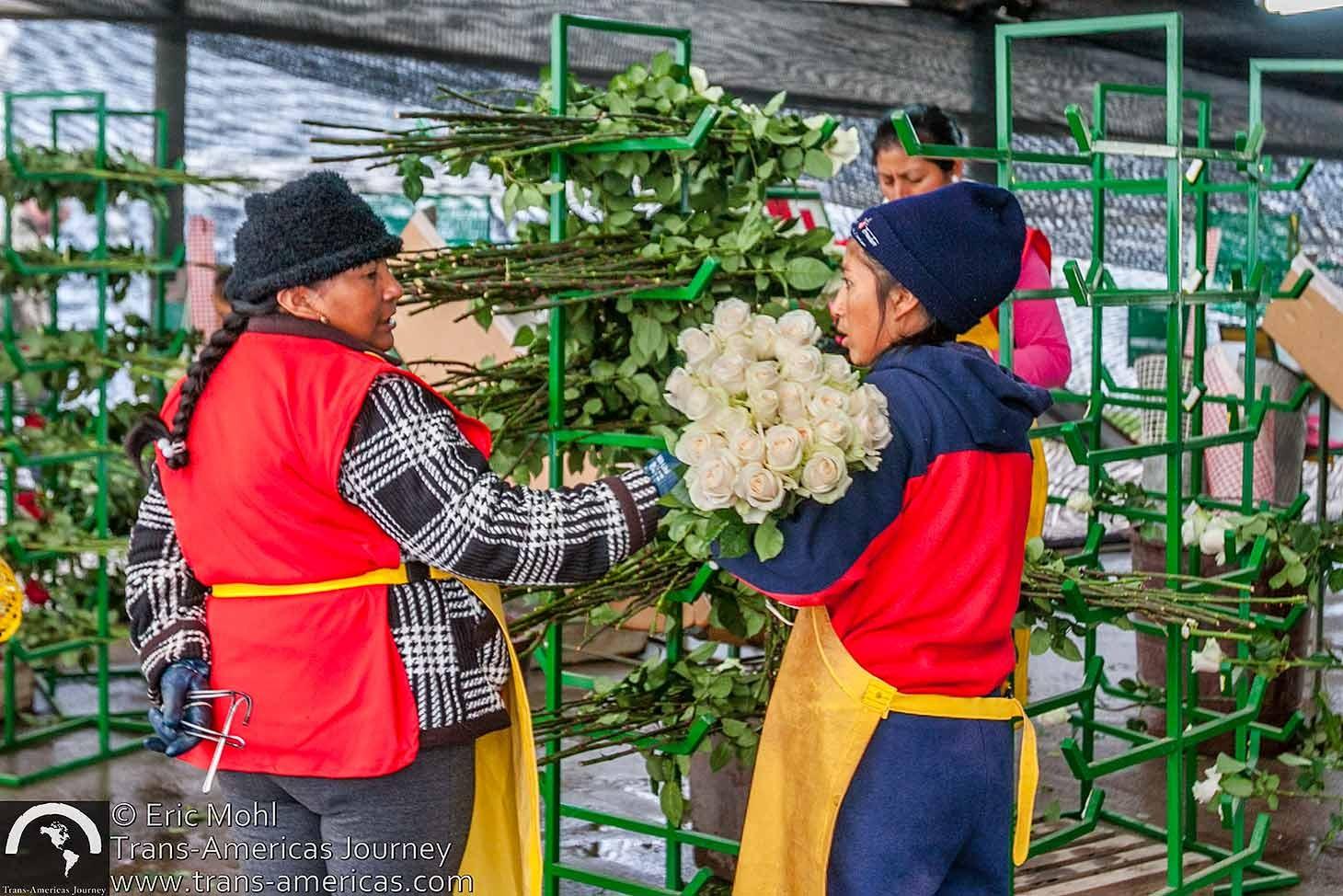 Ecuador-rose-farm@2x