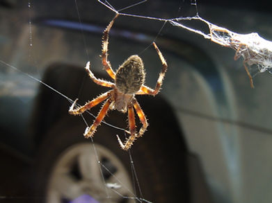 Asheville, 10-07, The spider 008.jpg