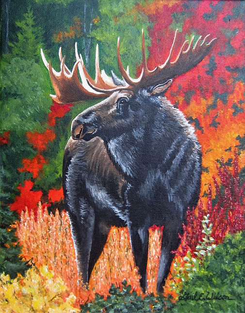 moose, autumn