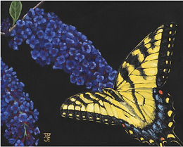 Eastern Tiger Swallowtail_small.jpg