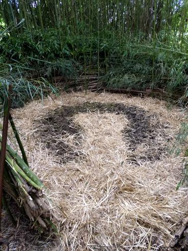 Zone micro-climatique dans la bambouseraie