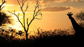 THE SILENT NOISES OF THE KRUGER PARK