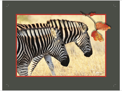Plain grey border zebra tablemat collection of eight