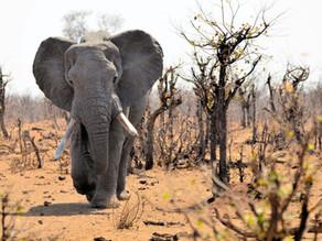 Private Family Kruger Safari