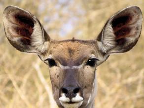 Classic Kruger Safari