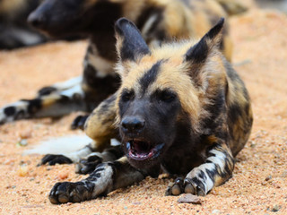 10-Day Cape and Kruger Safari