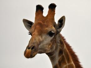 Private Luxury Kruger Safari