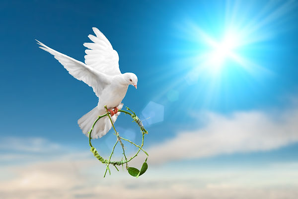 white dove holding green branch in pacif