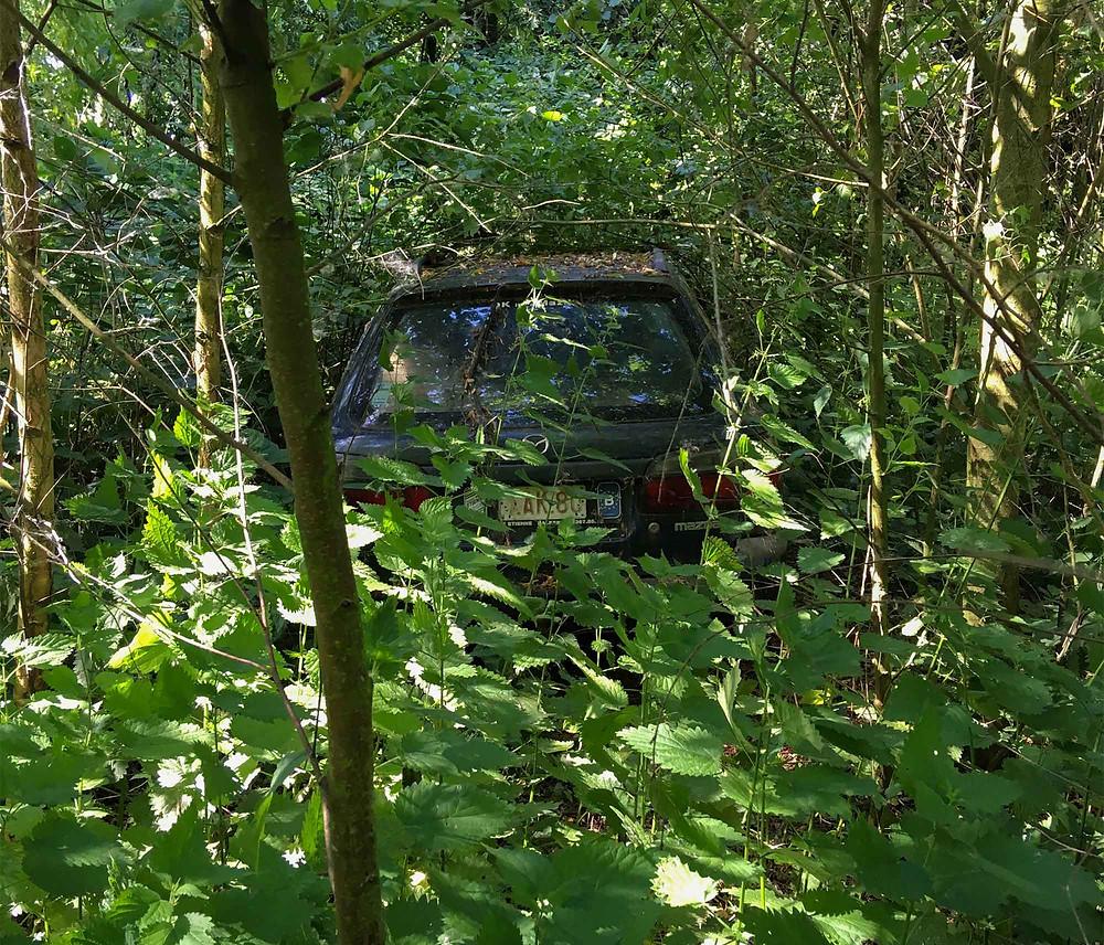 Maison Limmi bil gemt af buske og træer