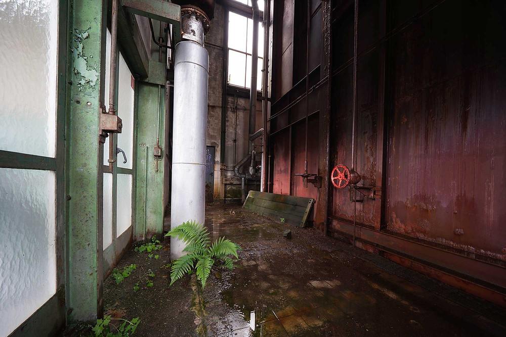 Planter gror indenfor på forladt kraftværk
