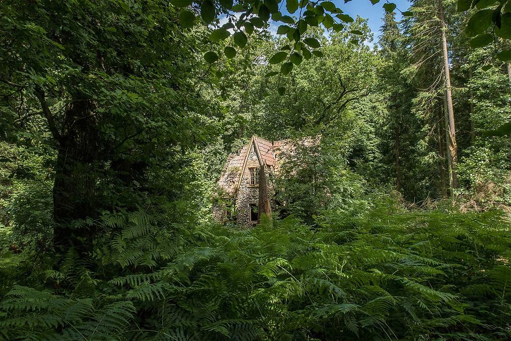 Det forladte hus Flintholm gemt bag bregner I skoven