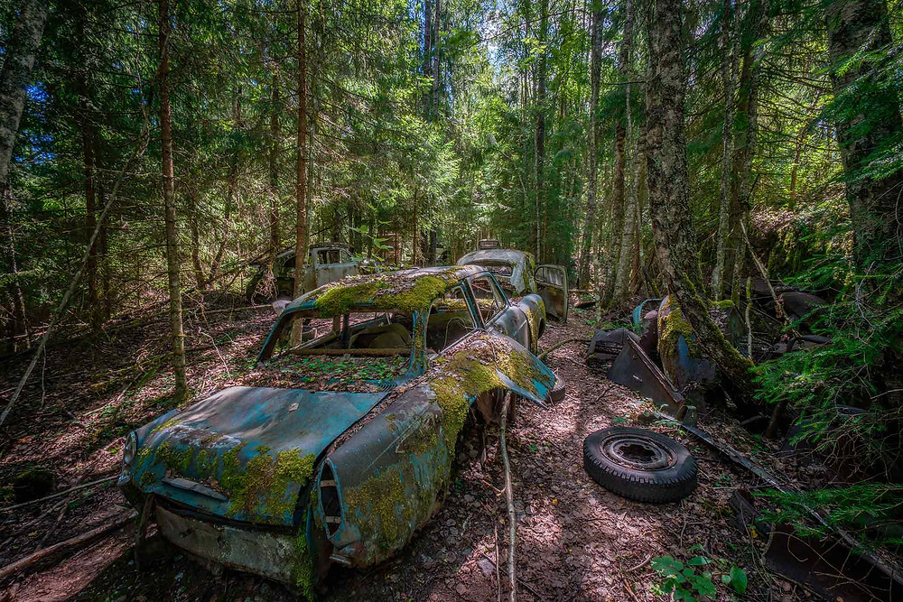 The forest is full of abandoned cars