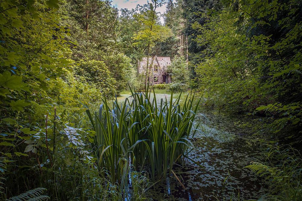 Flintholm i baggrunden med mosen i forgrunden