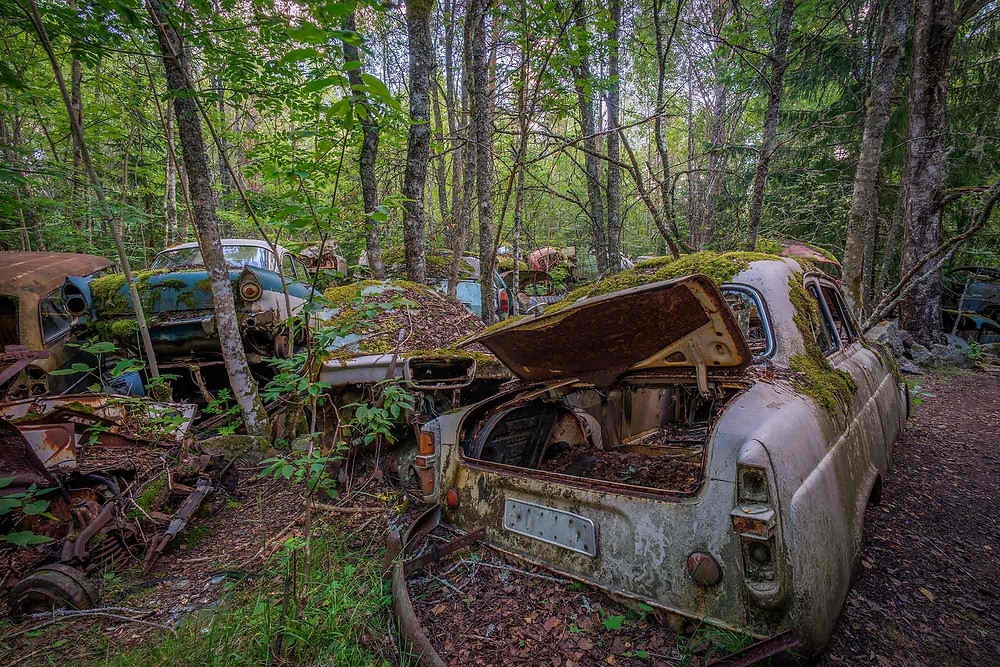Nature is taking over these old cars