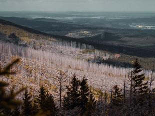 Waldsterben und Aufforstung im Harz - Borkenkäfer & Trockenheit