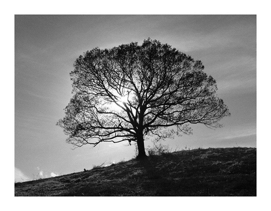 TreeTwitter5.jpg