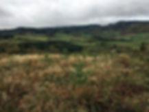 Plantation vauxrenard 3.2.JPG