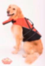 Golen Retriever perro de rescate