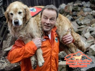 Golden Retriever perro de rescate