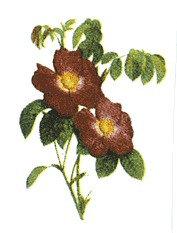 Flower Decals 282-050