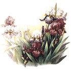 Flower Decals 282-053