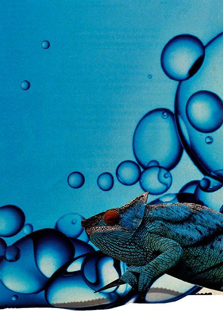 Camaleão_Azul - Arte Digital