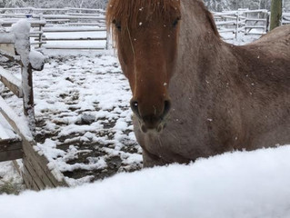 Snow in the Cariboo..Open House is still a go! Freddie says he is looking forward meeting you!
