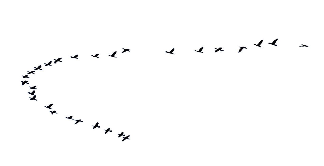 birds photo.jpeg