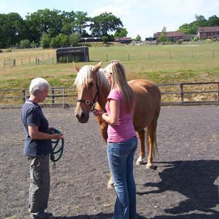 Personal development with the help of Jasper the horse