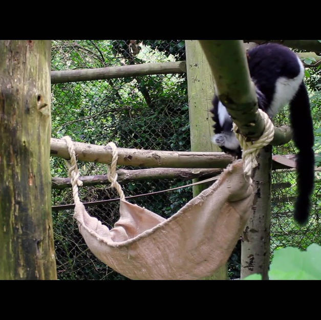BTEC 2012 graduates animal enrichment day at Port Lympne