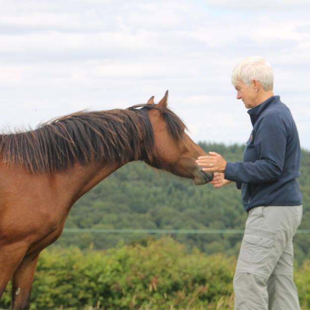 Healing a Welsh mountain pony in Wales