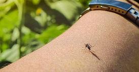 mosquito-mosquitos-virus-fiebre-del-nilo