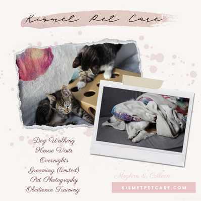 Kismet Pet Care - designs