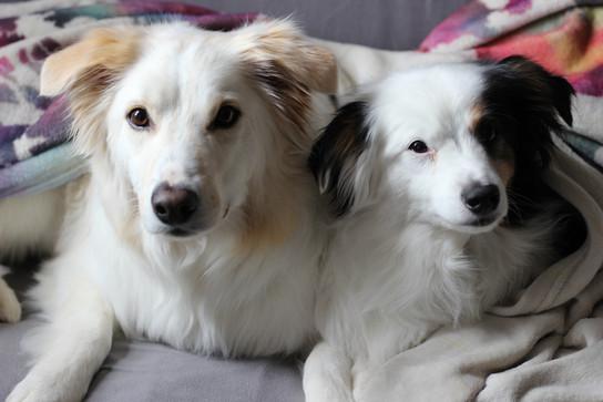 Frankie & Toby