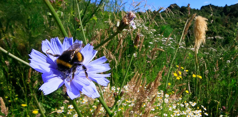 Bee 2 cropped .jpg