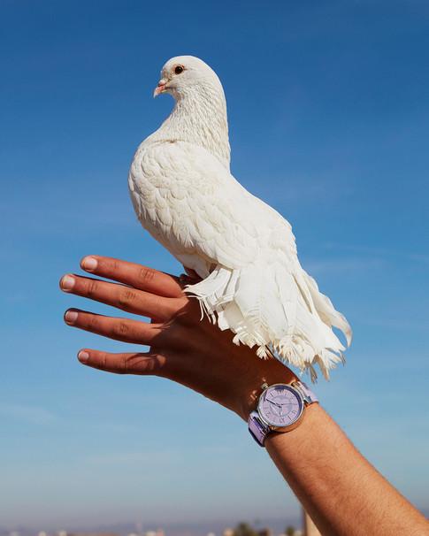 Louis Vuitton photoshoot in Morocco