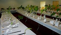 Cut-leaf tables, 2014