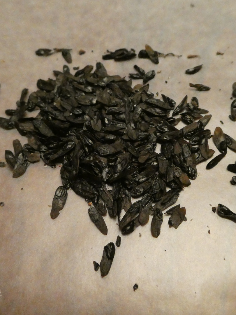 Pile of seeds