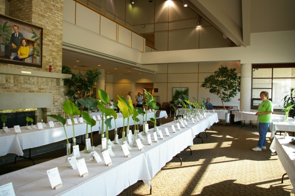 The cut leaf competition in 2010