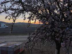 Perrachi sunset