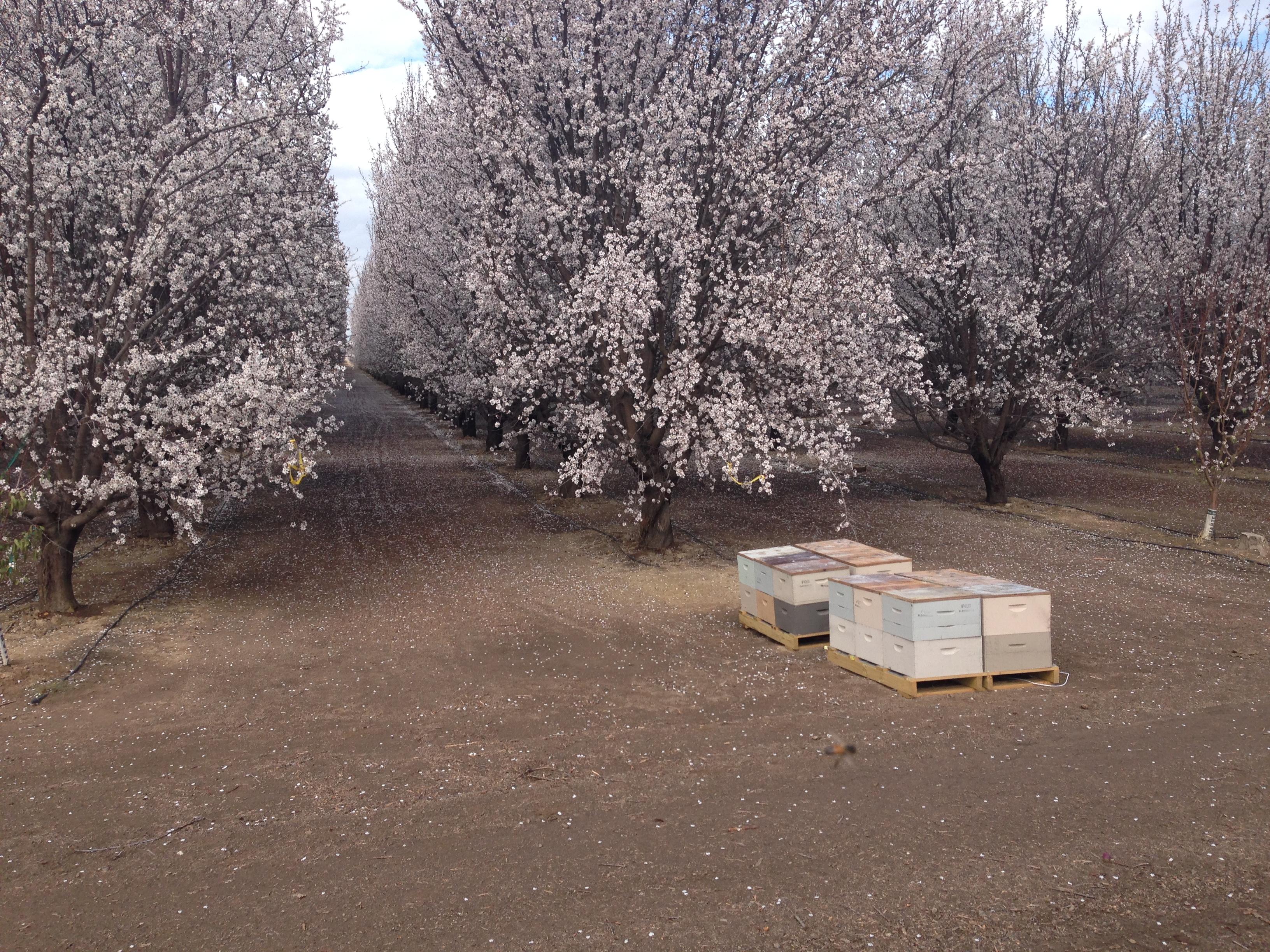 Fl Queen Bees