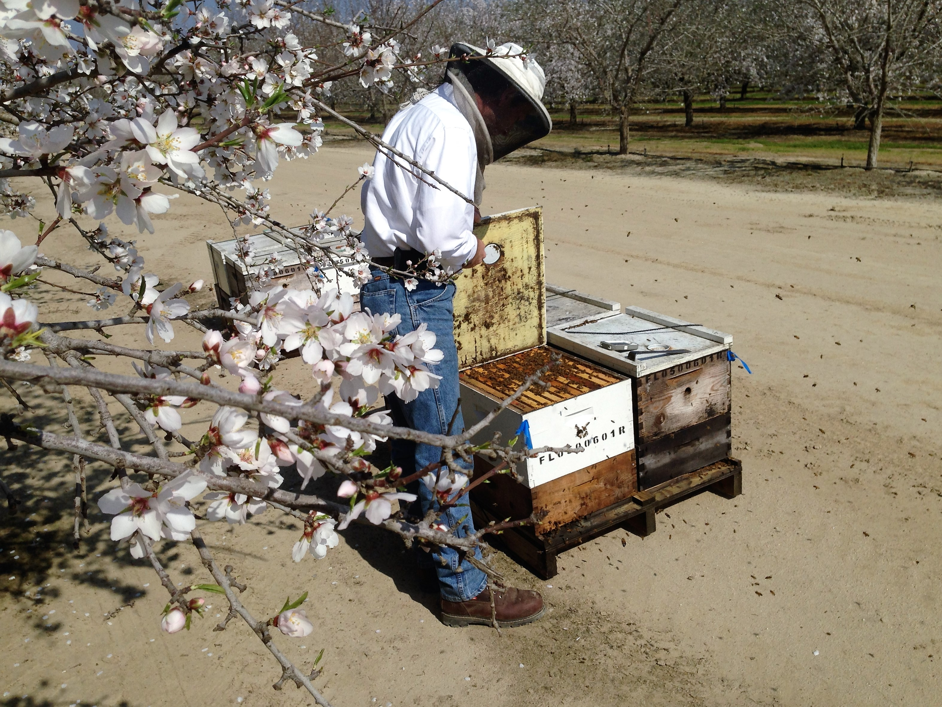 Checking Hives